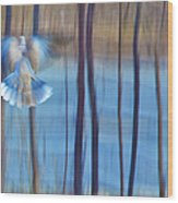 Morning Dove Wood Print by Theresa Tahara