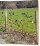 Morning Doves In December  Wood Print