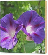 Morning Glory Couple Or 2 Purple Ipomeas Wood Print