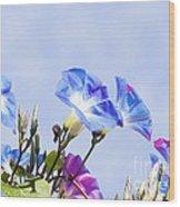 Morning Glory Flowers Wood Print