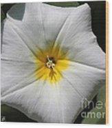 Morning Glory Named White Ensign Wood Print