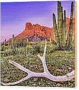 Morning In Organ Pipe Cactus National Monument Wood Print