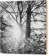 Morning In The Forest Wood Print