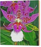 Morning Joy Orchid Wood Print