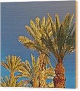 Morning Light Palms Wood Print