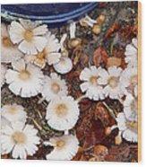 Morning Mushrooms Wood Print
