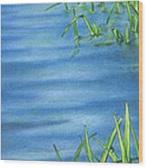 Morning On The Pond Wood Print
