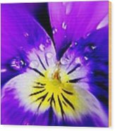 Morning Pansy Wood Print