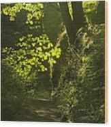 Morning Path Wood Print by Andrew Soundarajan