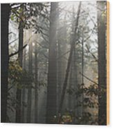 Morning Pines Wood Print