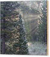 Morning Rays Wood Print