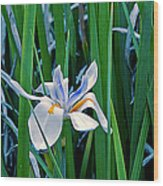 Morning Smile - Wild African Iris Wood Print