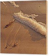 Morning Tide II Wood Print
