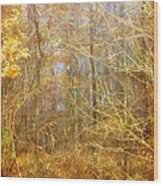 Landscape - Morning Walk In The Woods - 2 Wood Print