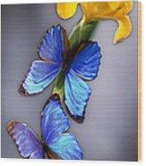 Morpho On Yellow Iris Wood Print