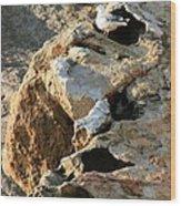 Morro Rock Nesting Wood Print