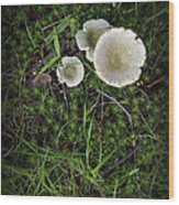Moss And Fungi Wood Print