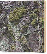 Moss And Lichen Wood Print