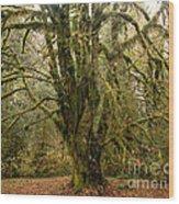 Moss-covered Bigleaf Maple  Wood Print