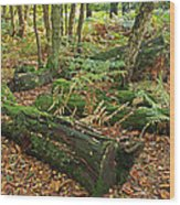 Moss Covered Logs On The Forest Floor Wood Print