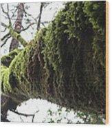 Moss Covered Tree Wood Print