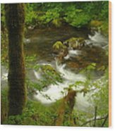 Moss Covered Trees Foregound Eagle Creek Wood Print
