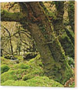 Moss Covered Trees In A Forest Wood Print
