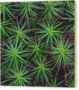 Moss Wood Print