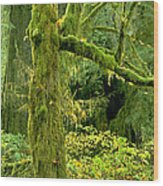 Moss Draped Big Leaf Maple California Wood Print
