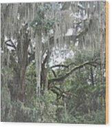 Moss Draped Live Oaks Wood Print