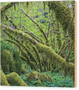 Moss Grows On Vine Maple Trees  Acer Wood Print