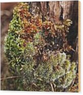 Moss On A Tree Wood Print
