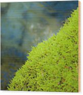 Moss On River Wood Print