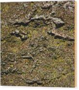 Moss On Rock Wood Print