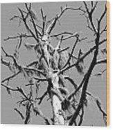 Moss On Snag Wood Print