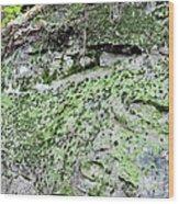 Moss Rock Wood Print
