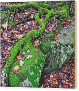 Moss Roots Rock And Fallen Leaves Wood Print