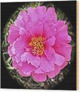 Moss Rose Wood Print