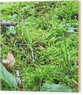 Mossy Bed Wood Print
