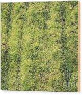 Mossy Grass Wood Print