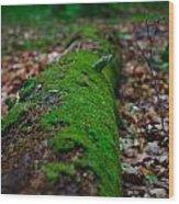 Mossy Log Wood Print