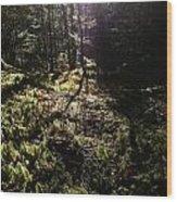 Mossy Patch Wood Print by Steven Valkenberg
