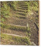 Mossy Path Wood Print
