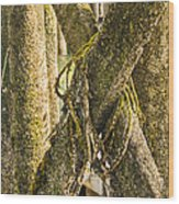 Mossy Pier Wood Print