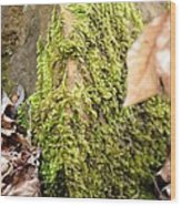 Mossy Rock Abstract 2013 Wood Print