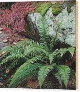 Mossy Rock And Fern Wood Print