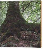 Mossy Roots Wood Print