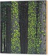 Mossy Sentinels Wood Print