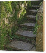 Mossy Steps Wood Print
