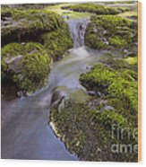 Mossy Stream Wood Print